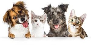 descuentos en animales-mascotas