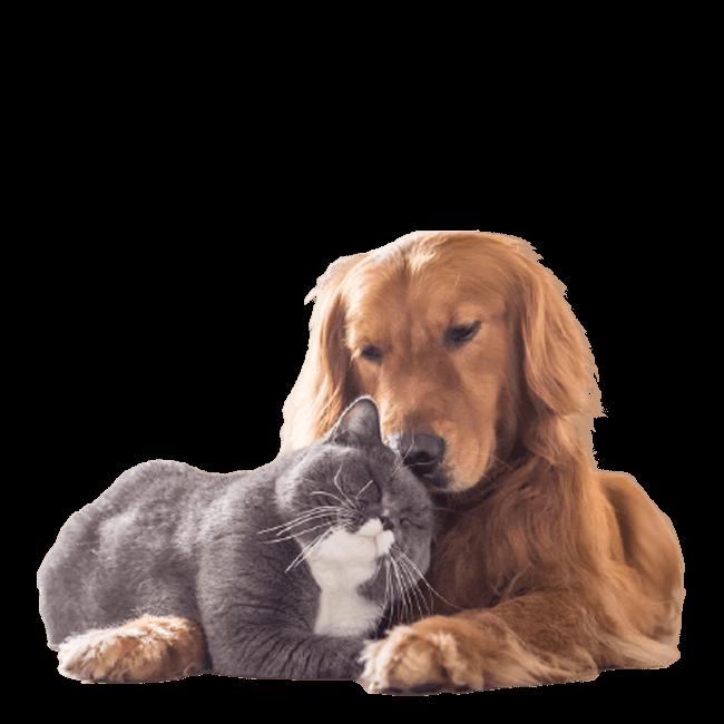 El Mundo - Descuentos en Mascotas
